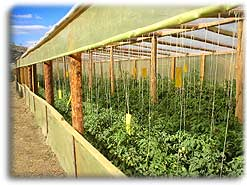 our greenhouses